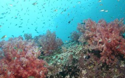 Coral Grief: A Voluntourism in Thailand Odyssey