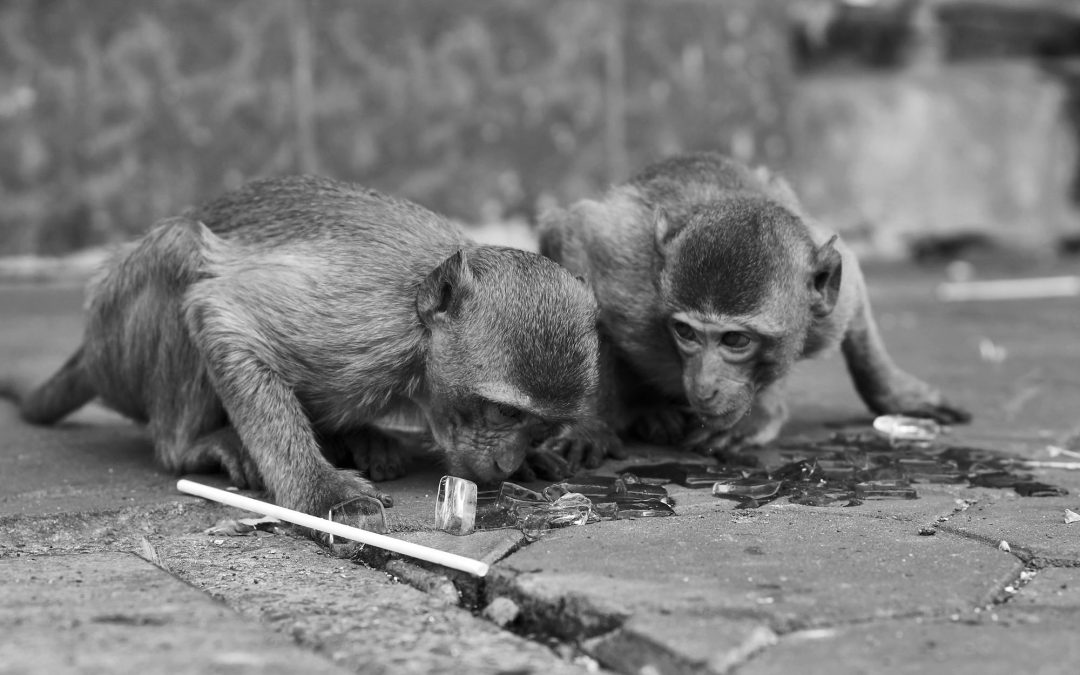 Lopburi Monkeys Get World's First Hospital for Primates