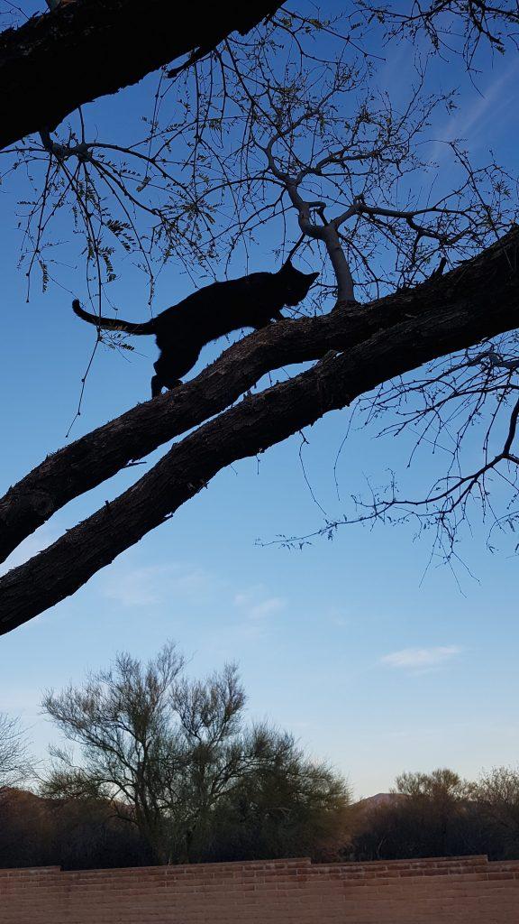Shot of my cat climbing a tree.